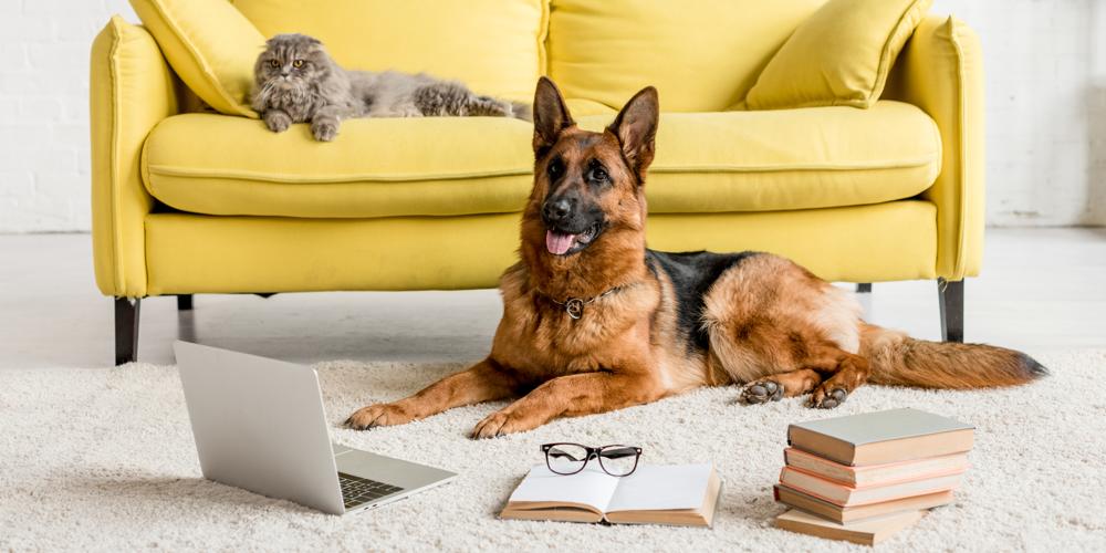 Hund und_Katze mit Büchern