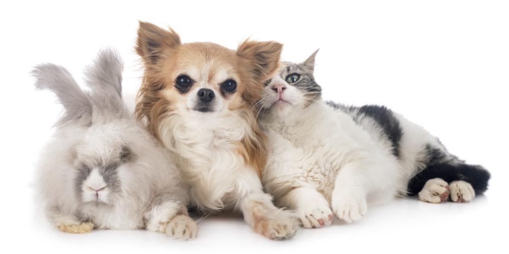 Kaninchen Hund Katze kuscheln