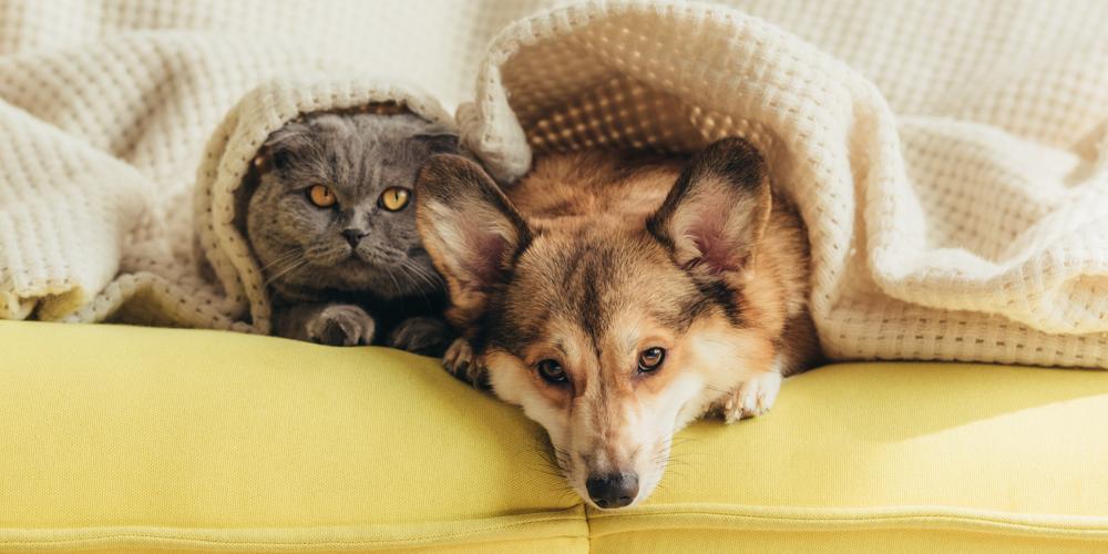 Hund und Katze zugedeckt auf dem Sofa