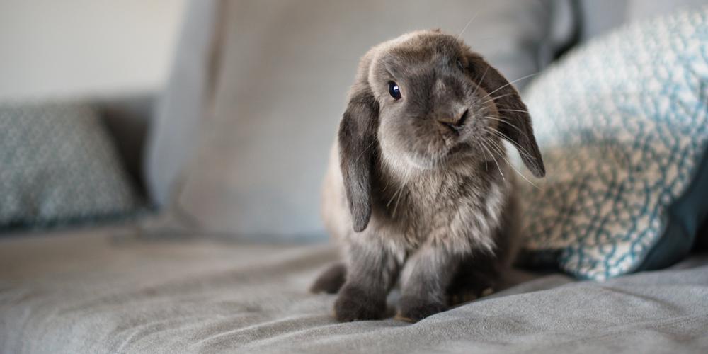 Kaninchen auf dem Sofa