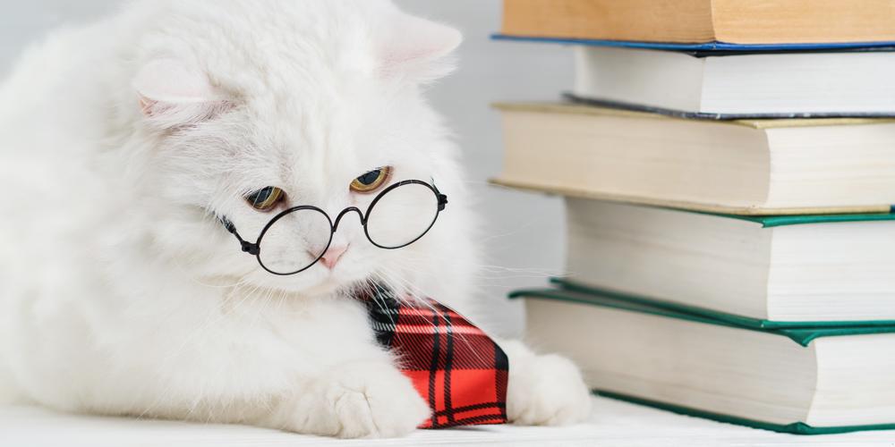 Katze mit Brille und Büchern